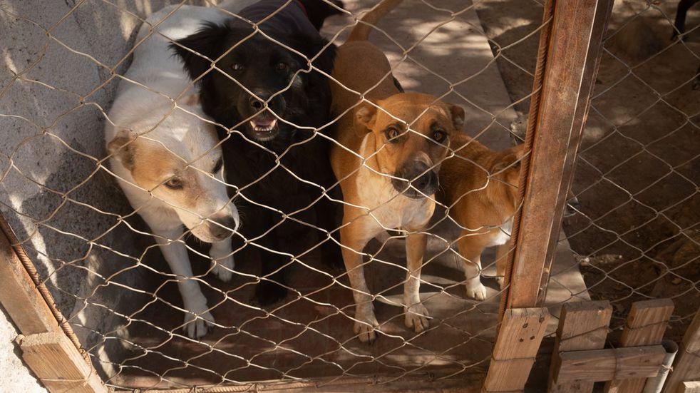 Una protectora de animales de Maipú realizará una convocatoria para liberar a mascotas en cautiverio