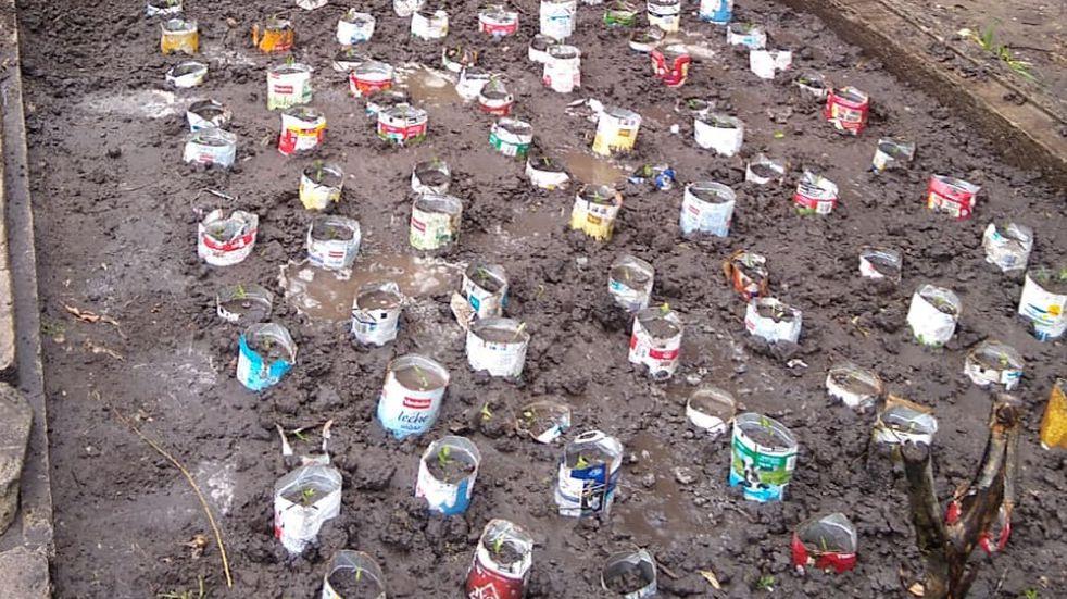 Con envases de Tetra Brik se cultivaron  más de cinco mil especies en el Parque Cabañas.