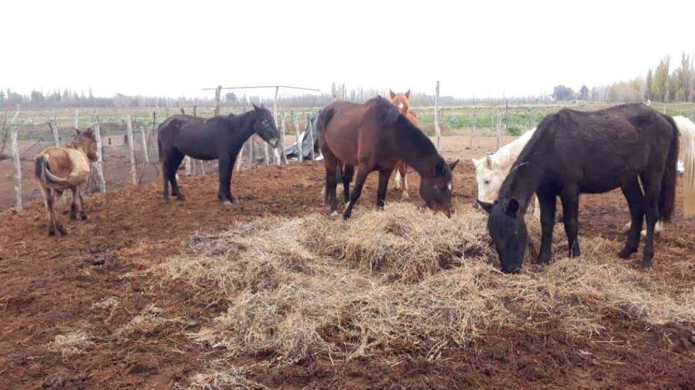 Trasladaron a los caballos rescatados en la finca del horror 3