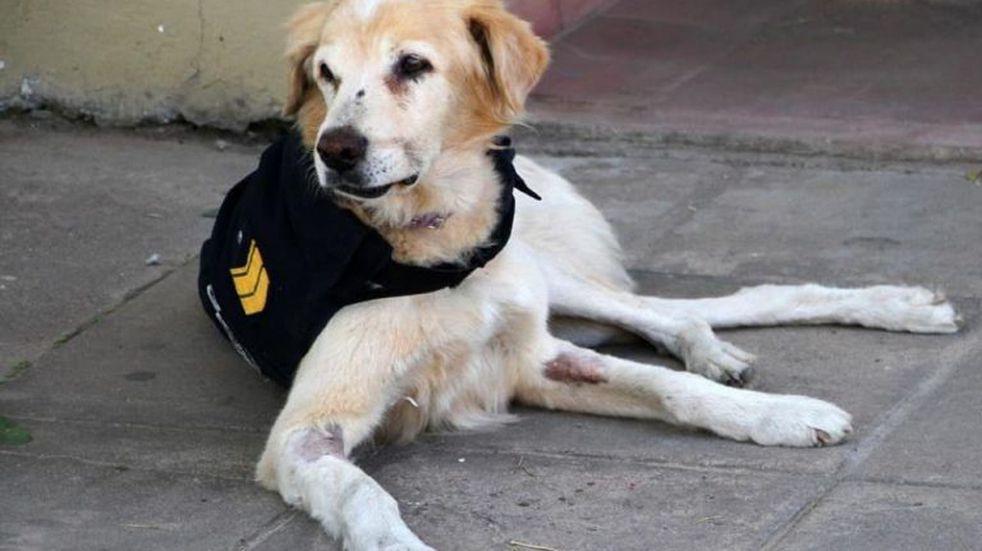 Mural en honor a Cartucho, el perro que prestaba servicio en la comisaría séptima