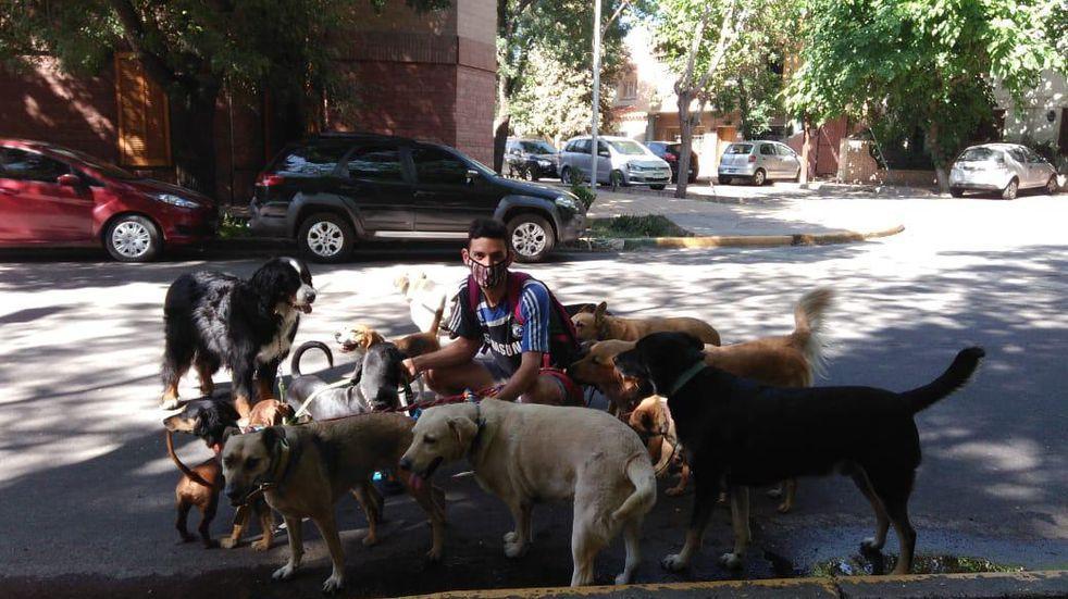San Martín multará con más de $1.000 a quienes no recojan las deposiciones de sus mascotas