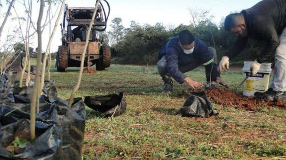 Plantaron un total de 500 árboles en la ciudad de Posadas