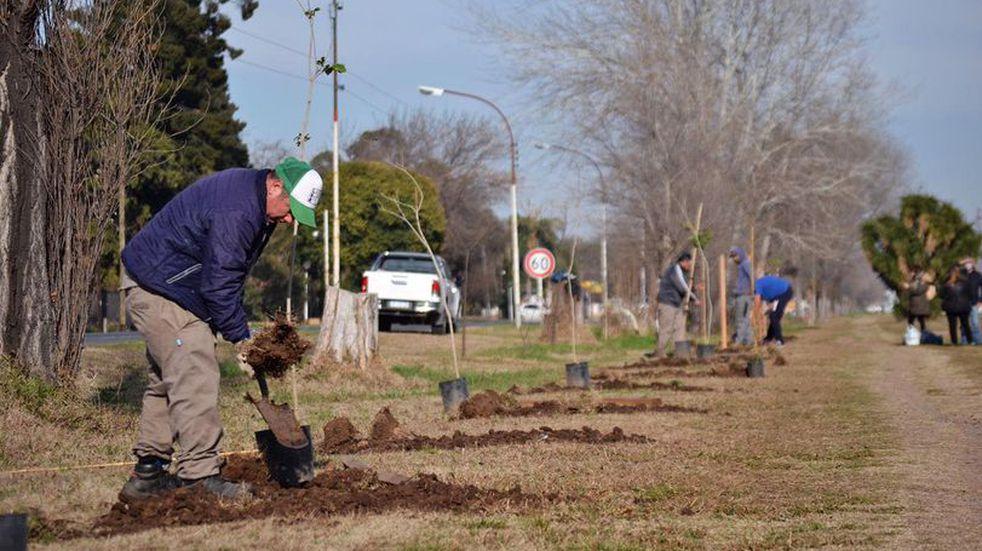 Pérez: se plantaron 70 árboles nativos en el Paseo del Caminante
