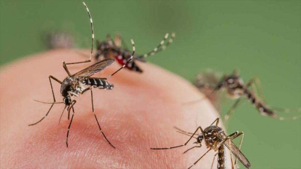 La Municipalidad intensifica acciones de prevención y erradicación de larvas de mosquito Aedes aegypti