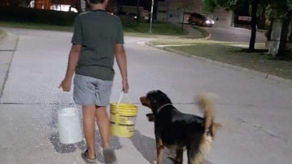 Adolescente entrerriano busca darles un hogar a animales abandonados