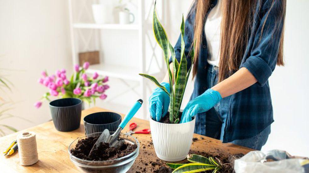 Diez tips para cuidar tus plantas en invierno