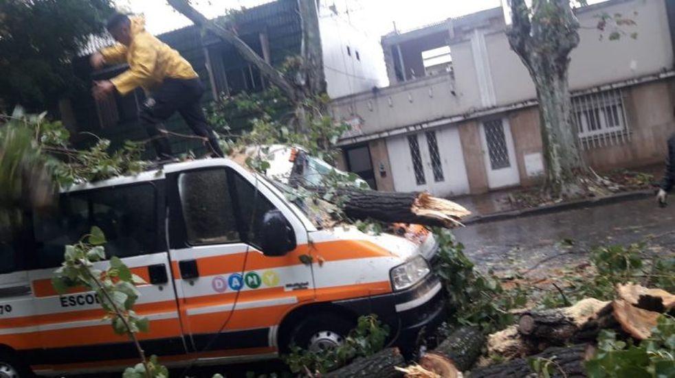 Estaba sin trabajar por la cuarentena y ahora un árbol le aplastó su transporte escolar