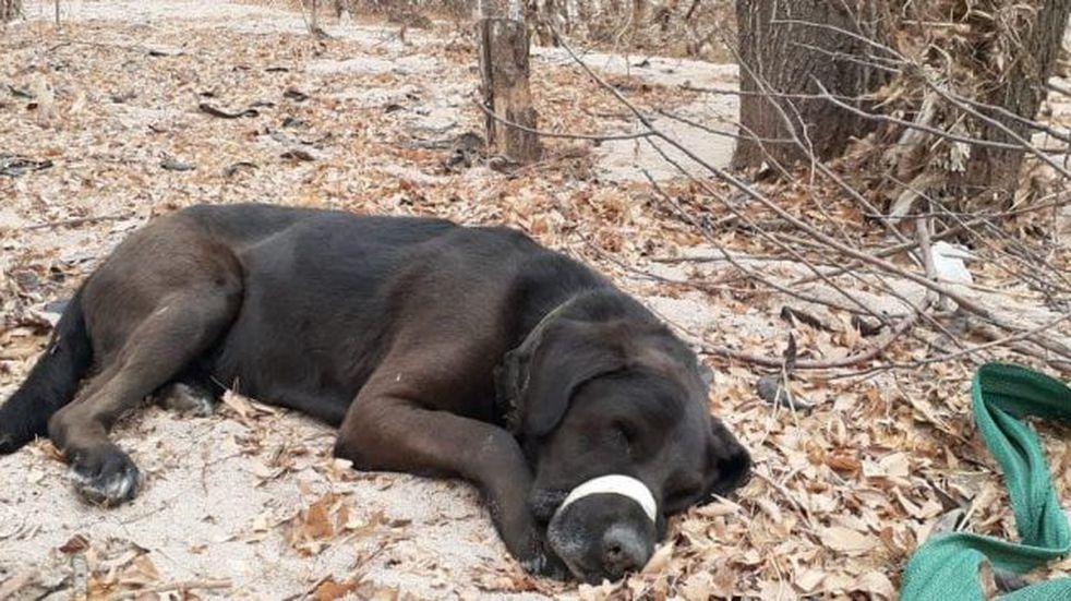 Maltrato animal: rescataron a un perro golpeado y con su hocico atado a orillas del río