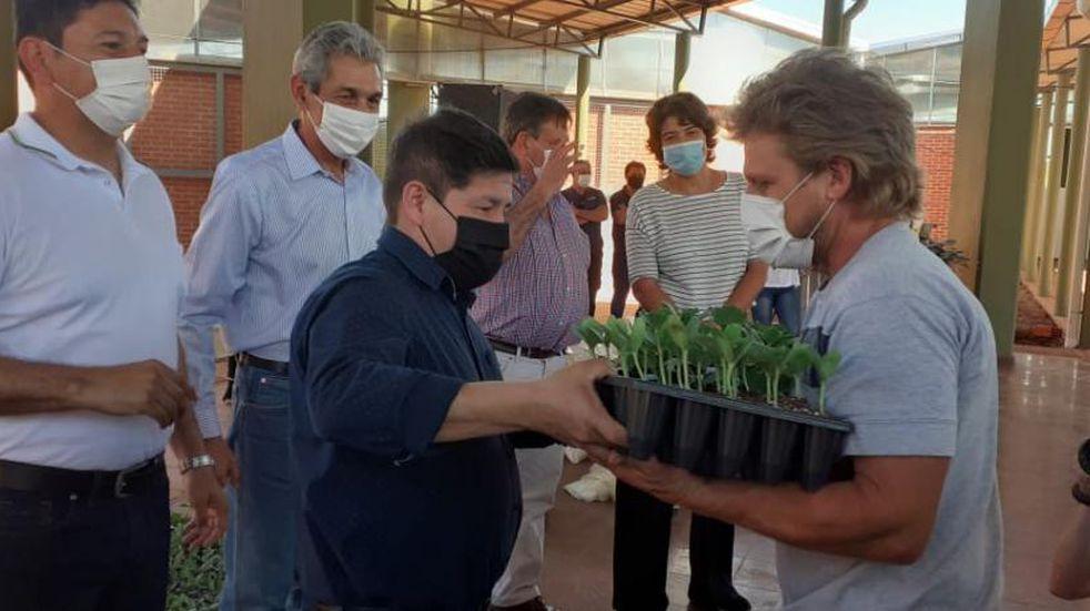 Entregaron plantines a productores de Eldorado