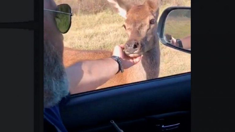 Se cruzó con una cría de ciervo en un camino rural de La Pampa y quedó sorprendido