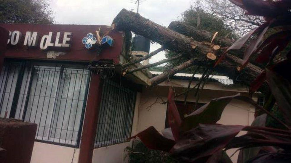 Horco Molle: un árbol cayó en un caps de la zona y corto los cables de luz