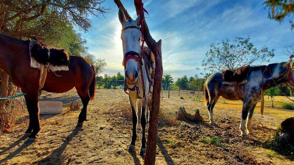 "Turismo rural y de aventura: ""Cabalgatas Ansenuza"""