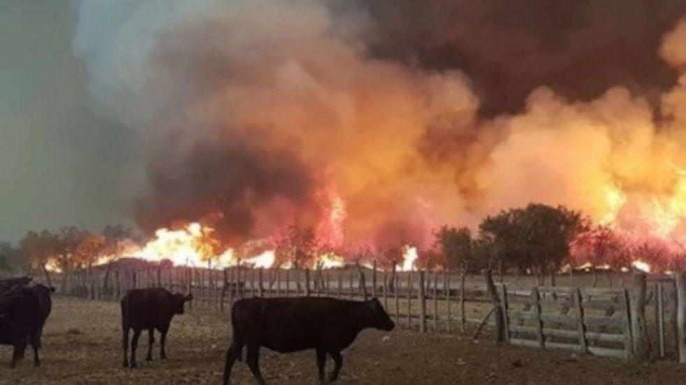 Organizan colecta para los animales afectados por los incendios en Mendoza