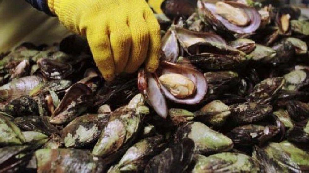 Atención Tierra del Fuego: rige un alerta por marea roja