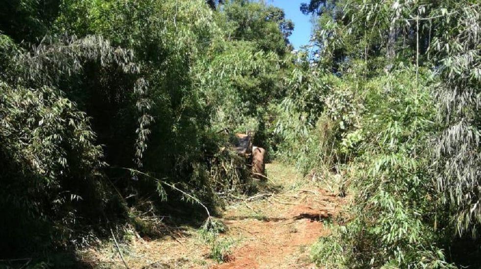 Durante una jornada laboral, un trabajador rural perdió la vida