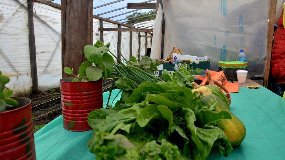 Economía sustentable en Tandil: debatirán un proyecto para regularizar la agroecología en la ciudad