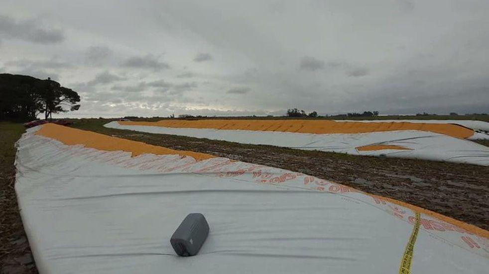 Rompieron silobolsas con 1.300 toneladas de maíz en un campo de María Teresa