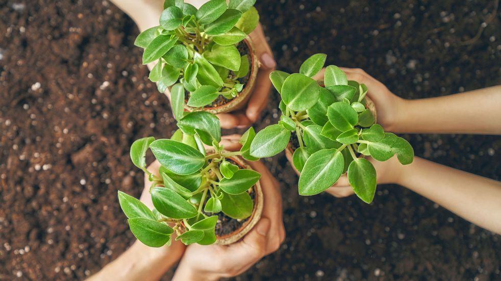 Ecoplatónica, el emprendimiento familiar que se basa en la cosmética natural