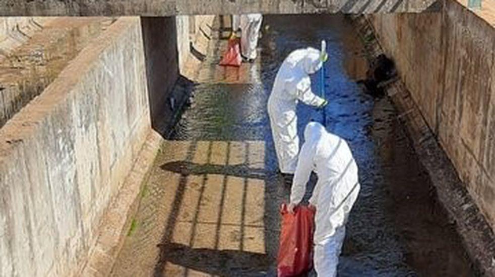 Sacaron 300 kilos de peces muertos en el arroyo Vicario de Posadas