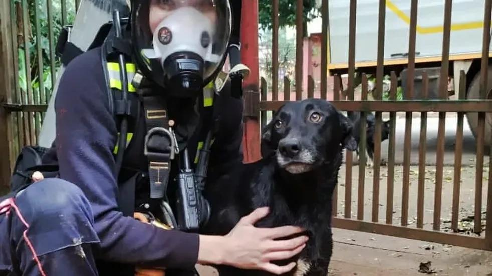 Bomberos de Iguazú rescatan a un perro que cayó a un pozo de 12 metros