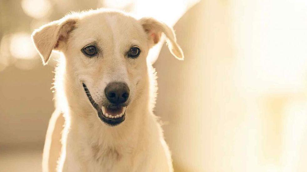 10 curiosidades científicas que te van a hacer amar aún más a los perros