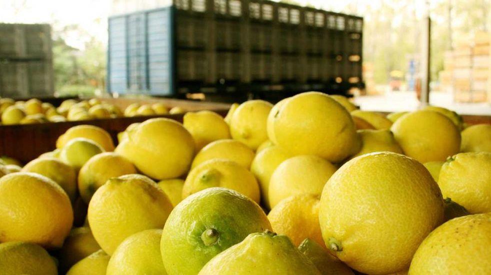 Requerido. Los envíos de limones mejorarán la competitividad de esta producción del NOA (Prensa Agroindustria).