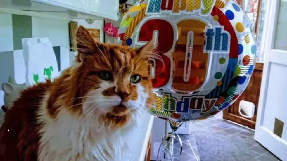 """""""Rubble"""": el gato vivo más longevo del mundo cumplió 32 años"""
