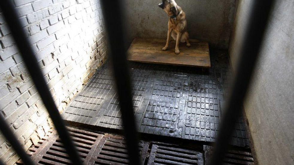 Se abrirán nuevos centros de castración y volverá la perrera
