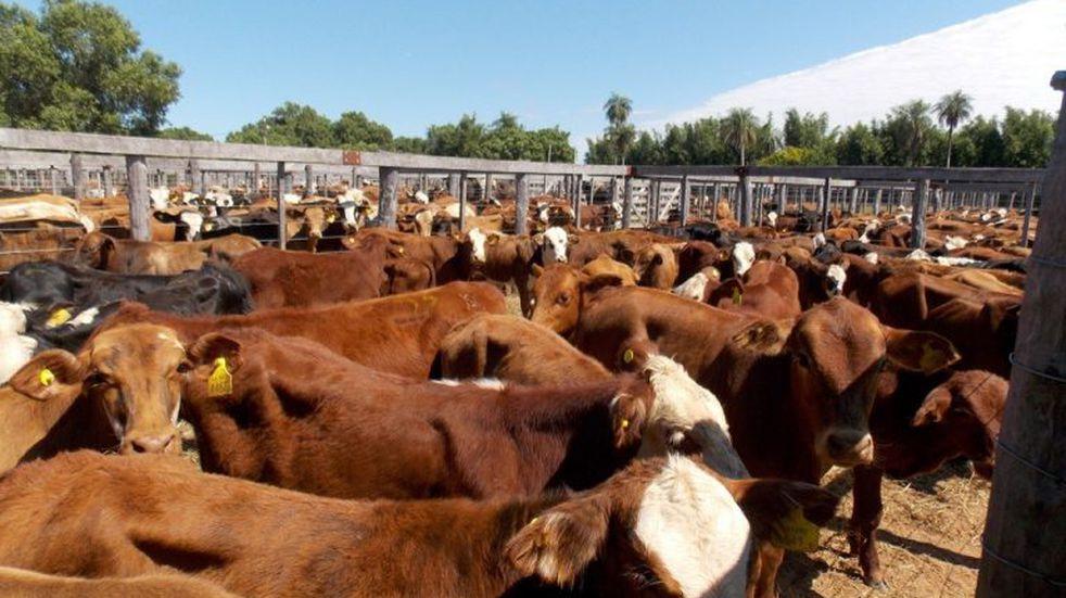 Más repudio correntino al cierre de las exportaciones de carnes