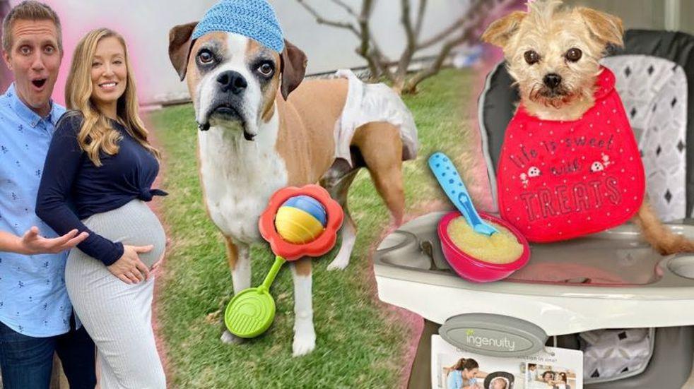 Un joven lleva de compras a perros sin hogar y les da el gusto en todo lo que tocan