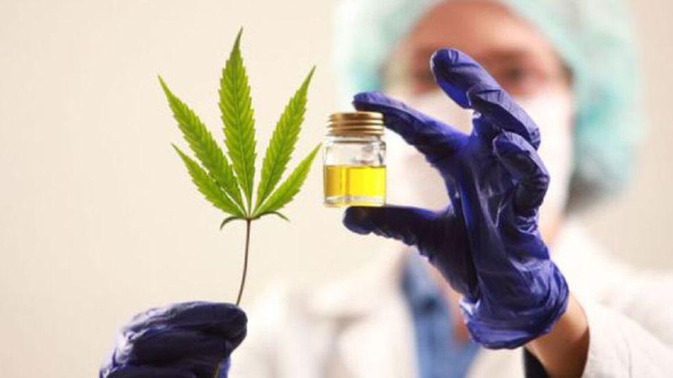 Este martes se votará el proyecto para producir cannabis medicinal en Mendoza