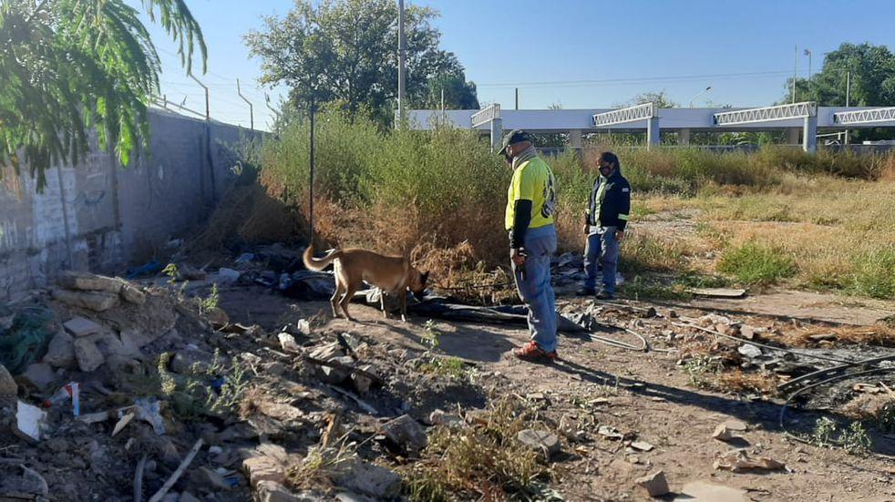 El equipo de perros adiestrados de Maipú, Escam, trabaja al servicio de la comunidad