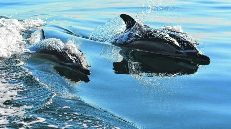 Delfines muertos en las costas de Río Negro.