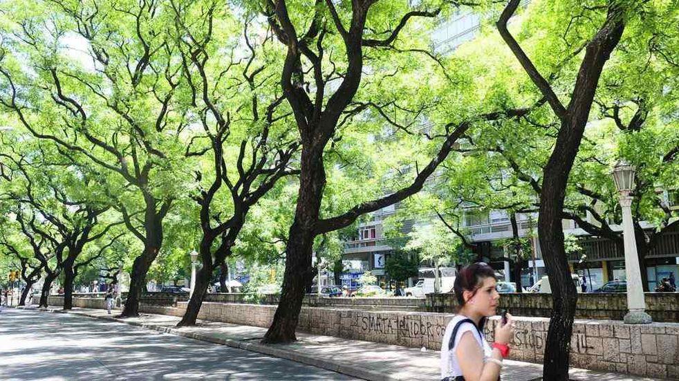 Requisitos para la poda de árboles en Córdoba
