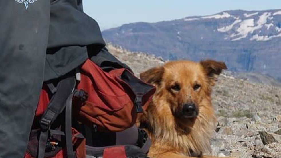 """Perro de """"Oro"""": ayudó a su dueño a salir de un ACV y subió cuatro veces el Aconcagua"""