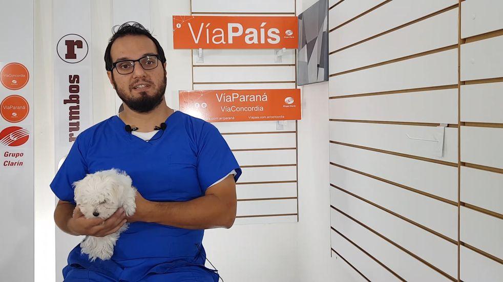 Cómo cuidar la salud emocional de nuestras mascotas