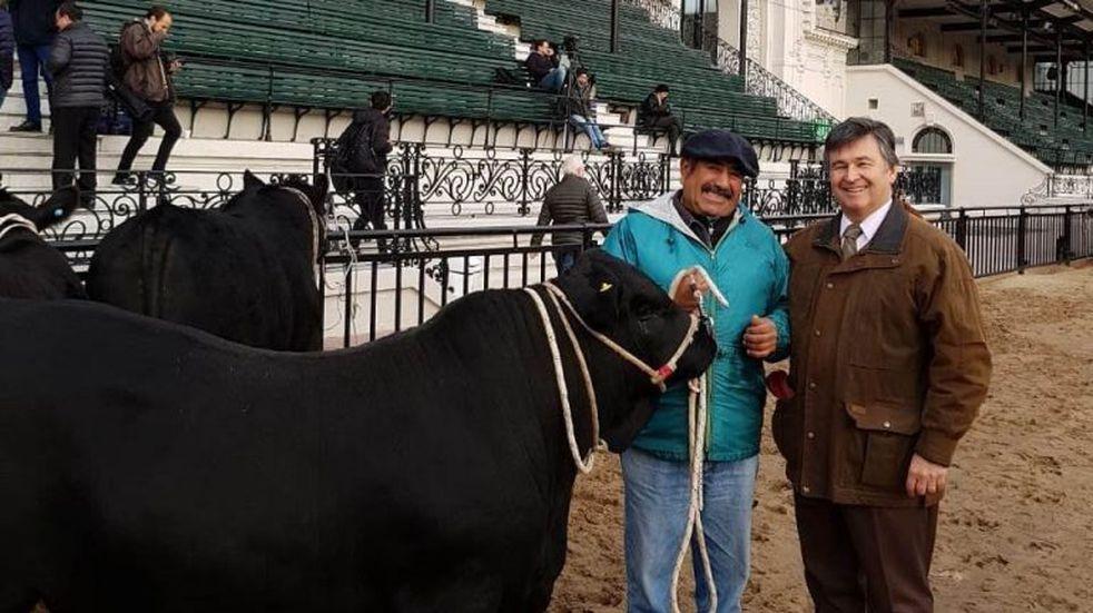 """Ingresó el primer toro a la 133° Exposición Rural y lo bautizaron """"Apollo"""""""