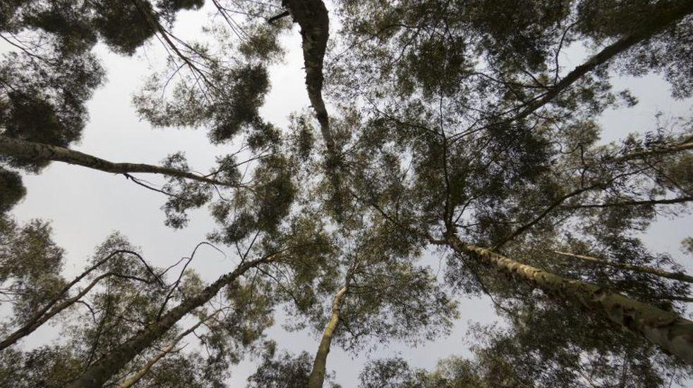Un hombre de Chajarí murió aplastado por un tronco de eucaliptus