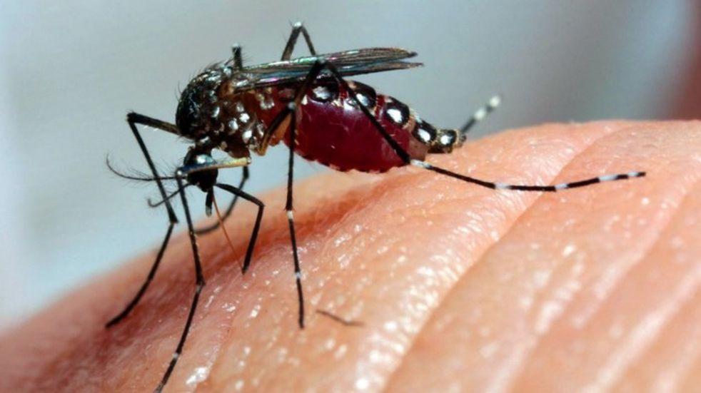 Continúa la invasión de mosquitos en la Costa Atlántica