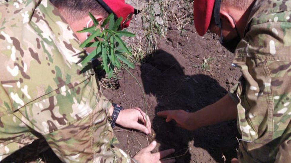 Personal del Ejército Argentino colaboró en una nueva jornada de forestación en Carlos Paz