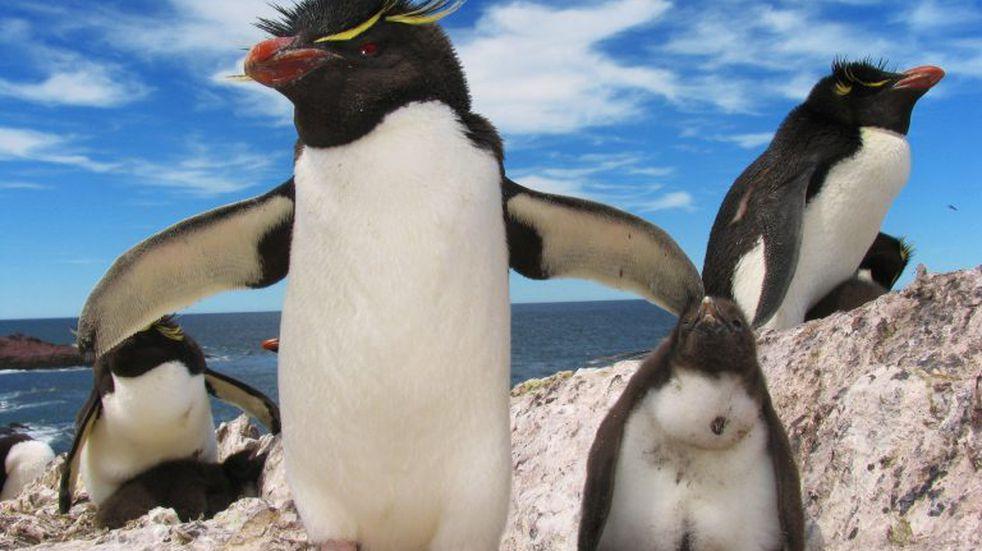 Isla Pingüino a un paso de los vecinos de Puerto Deseado