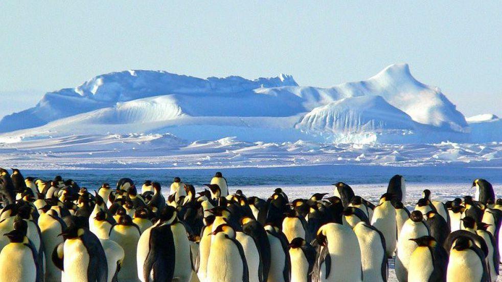 Mediante tecnología satelital descubrieron nuevas colonias de pingüinos en la Antártida