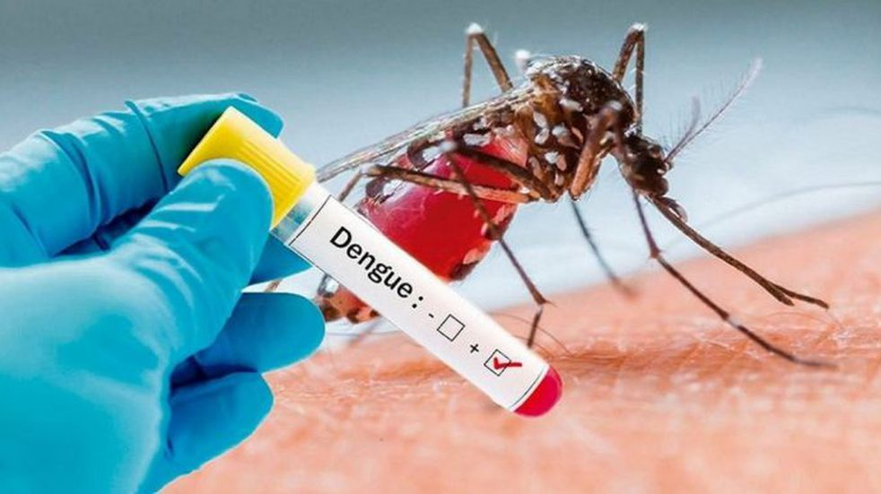 Siguen aumentando los casos de dengue en Tucumán: ya suman 62