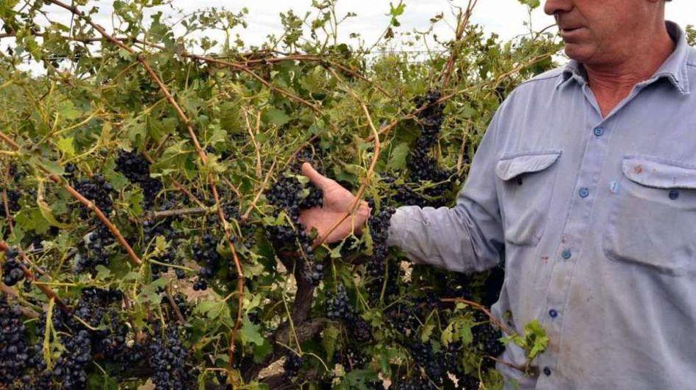 Seguro Agrícola: piden a productores que completen los datos online para recibir el pago