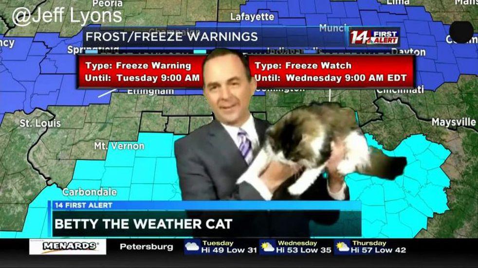 Un meteorólogo presenta el pronóstico del tiempo con su gata y se vuelve viral