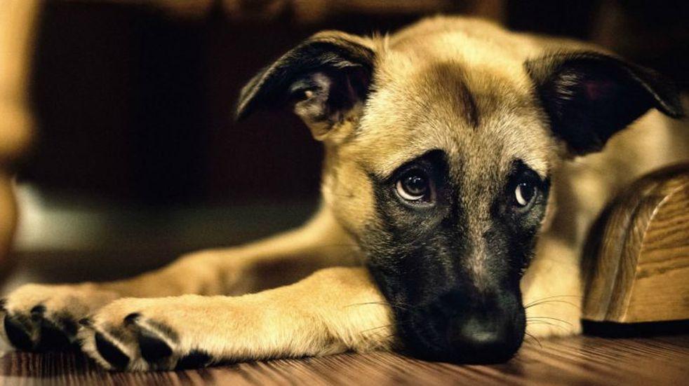 Coronavirus: el viral llanto de un perro por no poder ir al parque