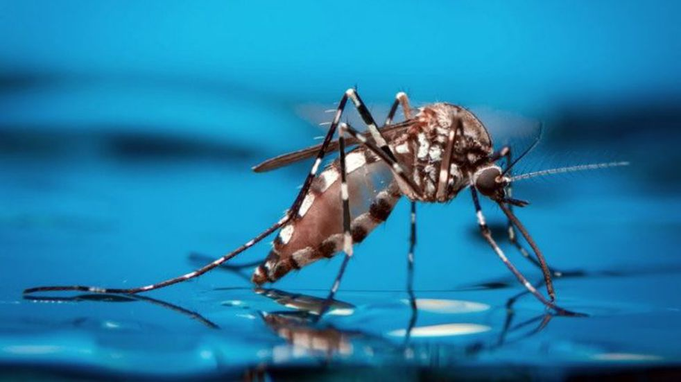 3510 casos confirmados de Dengue en la provincia
