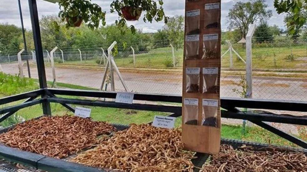 """El Programa """"Más árboles, Más vida"""" ya recolectó casi 2 millones de semillas"""