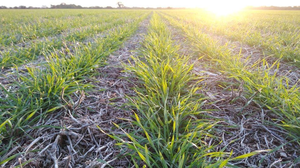 El comportamiento volátil del mercado de la soja, el maíz y el trigo
