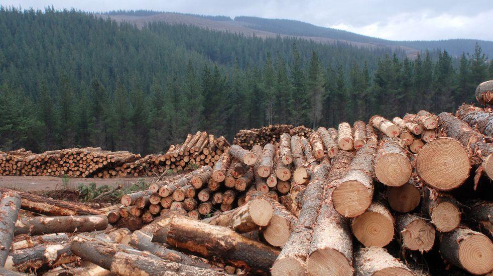 ¿Qué es la silvicultura de precisión?